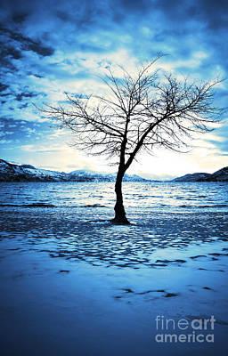 Skaha Lake Photograph - The Lonely Tree by Tara Turner