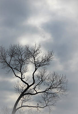 Motivational Photograph - The Lonely Tree by The Art Of Marilyn Ridoutt-Greene