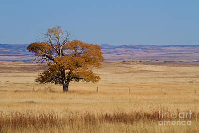 Photograph - The Loner by Jim Garrison