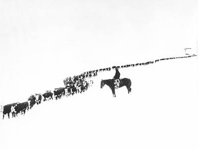 Cowboys Photograph - The Long Long Line by Underwood Archives  Charles Belden