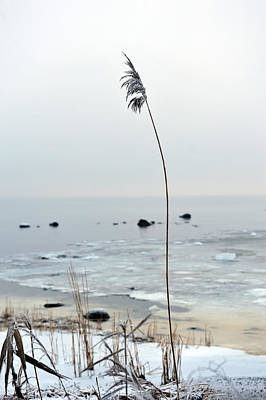Photograph - The Longest Straw by Randi Grace Nilsberg