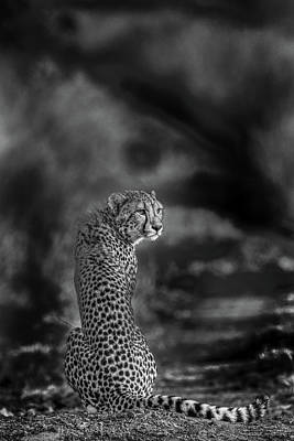 Cheetah Photograph - The Look Back by Jaco Marx