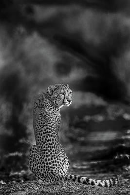 Cheetah Wall Art - Photograph - The Look Back by Jaco Marx