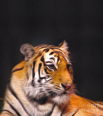 The Look Art Print by Nur Roy