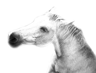 Delicate Digital Art - The Look Of Horse 2 by Gina Dsgn