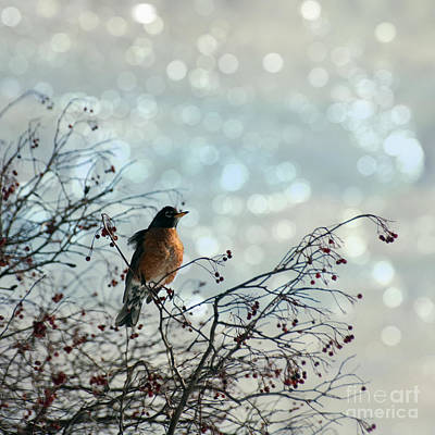 The Lookout Art Print by Diane Miller