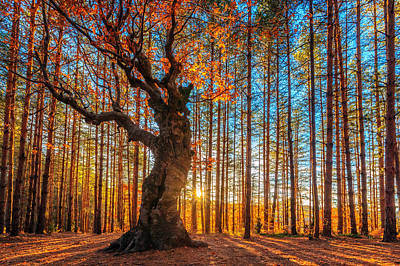 Autumn Photograph - The Lord Of The Trees by Evgeni Dinev