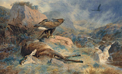 Eagle Painting - The Lost Hind by Archibald Thorburn