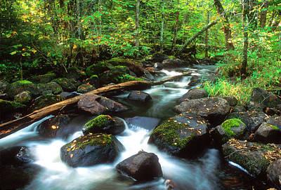 The Lost Poplar River Original by Michael Maltese