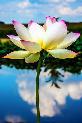 Fuchsia Photograph - The Lotus Blossom by Jon Woodhams