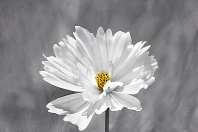 Photograph - The Love Flower by Kim Hojnacki