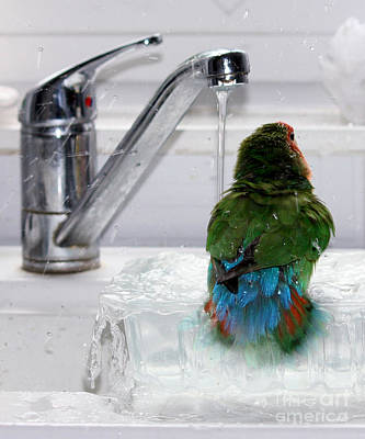 Pickled Photograph - The Lovebird's Shower by Terri Waters