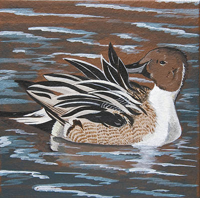 Painting - The Lovely Pintail by Jennifer Lake