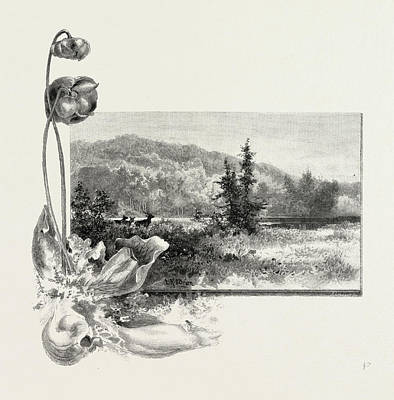 Pitcher Plants Drawing - The Lower St. Lawrence, Home Of The Pitcher Plant by Canadian School