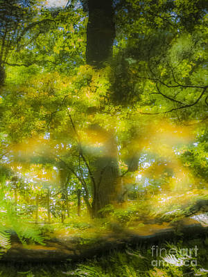 Photograph - The Magic Forest-02 by Casper Cammeraat