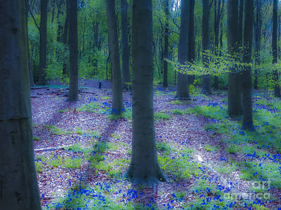 Photograph - The Magic Forest-06 by Casper Cammeraat