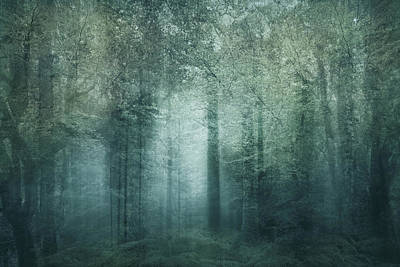 Photograph - The Magic Forest by Sharon Johnstone