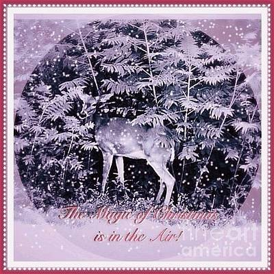 Photograph - The Magic Of Christmastime In A Woodland II by Kimberlee Baxter