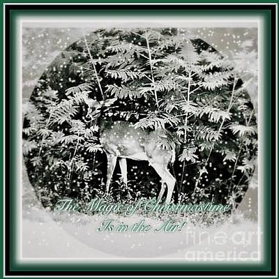 Photograph - The Magic Of Christmastime In A Woodland by Kimberlee Baxter