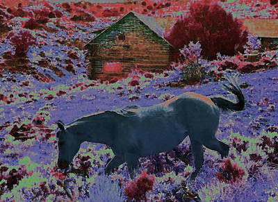 The Magic Of Horse Art Print