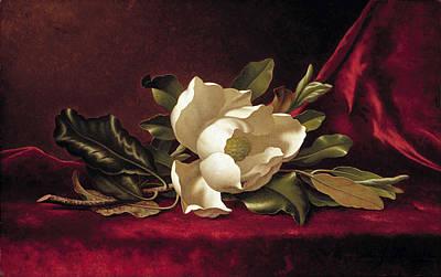 Magnolia Blossom Painting - The Magnolia Blossom by MotionAge Designs