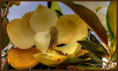 The Magnolia Art Print