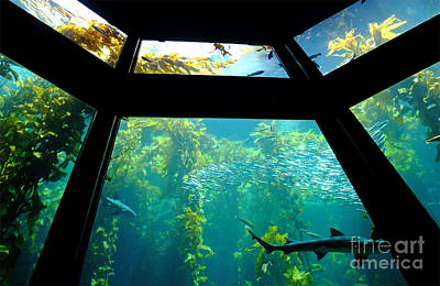 Photograph - The Main Tank At The Monterey Bay Aquarium by Jim Fitzpatrick