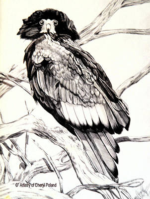 Drawing - The Majestic Russian Stellar Eagle by Cheryl Poland