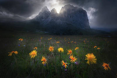 Wildflower Wall Art - Photograph - The Majesty Of Sassolungo by Luca Rebustini