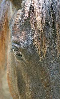 Forelock Photograph - The Mane Eye by Bruce Gourley