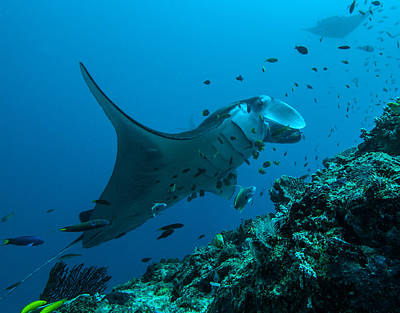 Art Print featuring the photograph The Manta From Manta Alley by Terry Cosgrave