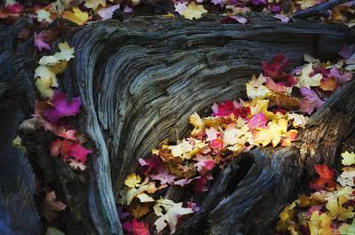 Pink Confetti Photograph - The Many Colors Of Fall  by Saija  Lehtonen