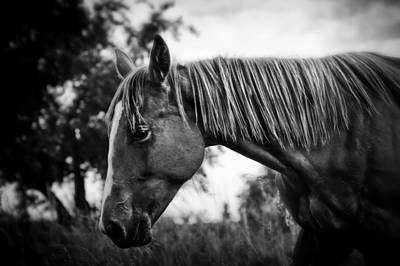 Wall Art - Photograph - The Mare by Sabine Peters