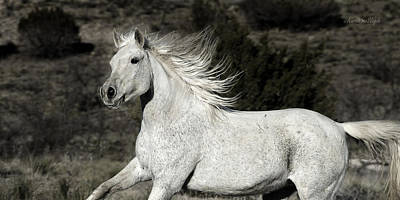Loping Photograph - The Mare With The Flying Mane by Karen Slagle