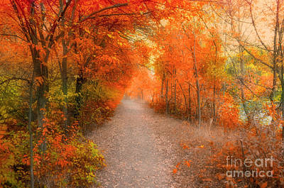 Photograph - The Marmalade Path by Tara Turner