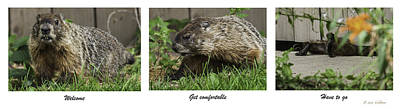 Photograph - The Marmot Check Out by Edward Peterson