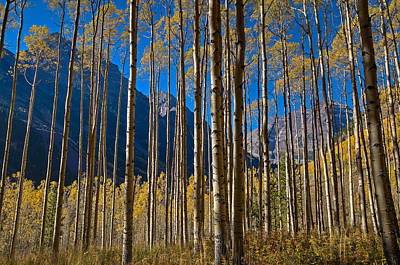 Colorado Captures Photograph - The Maroon Curtain by Mike Berenson