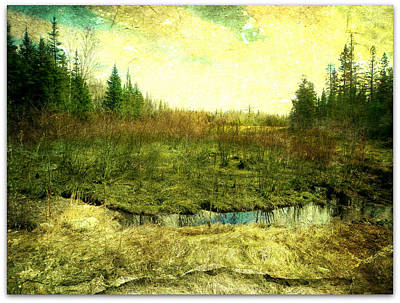 The Marshland  Art Print by Dianne  Lacourciere