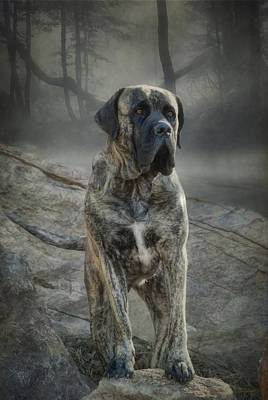 The Mastiff Art Print by Fran J Scott