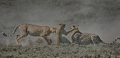 Art Print featuring the photograph The Mating Game by Gary Hall