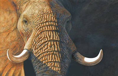 Painting - The Matriarch Elephant Portrait by David Clode