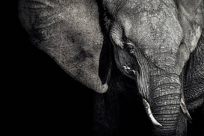 Experience Photograph - The Matriarch by Piet Flour