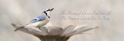 Bluejay Digital Art - The Meaning Of Life by Lori Deiter