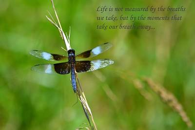 Photograph - The Measure Of Life by Deena Stoddard