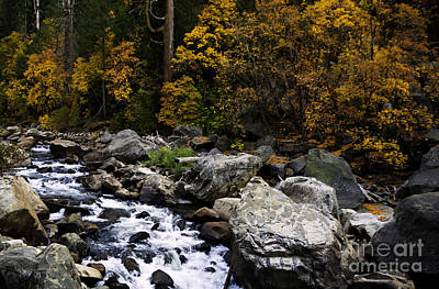 Photograph - The Merced River by David Millenheft