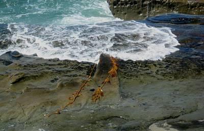 Photograph - The Mermaid Necklace by Melissa McCrann