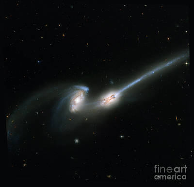Heavenly Body Photograph - The Mice Ngc 4676 by Science Source