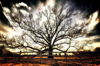 Photograph - The Mighty Ent by Mark Fuller