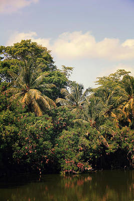Photograph - The Mighty Jungle by Laurie Search