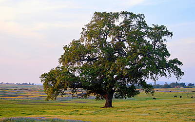 Photograph - The Mighty Oak by AJ  Schibig